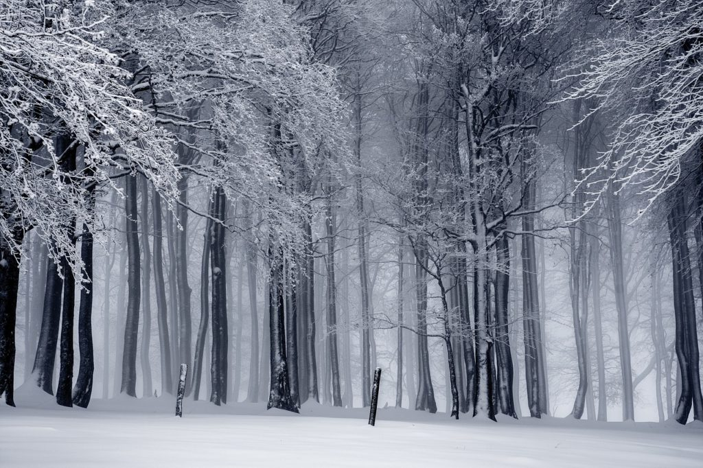 Black and White Frozen Forest Winter Scene