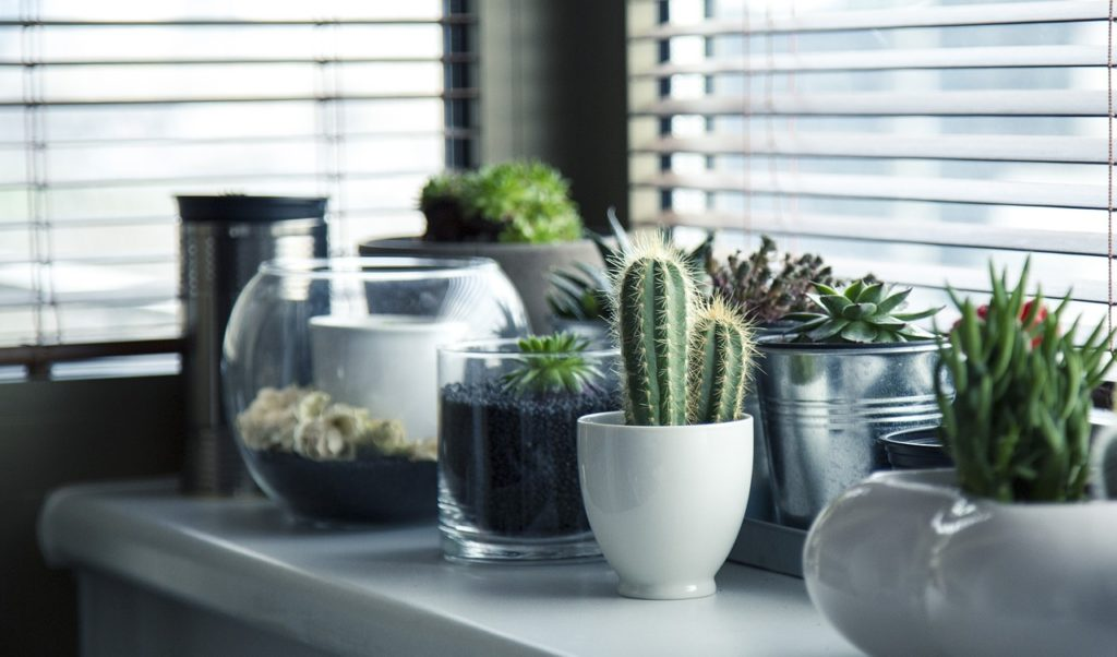Tips for Creating an Eco Friendly Green Home