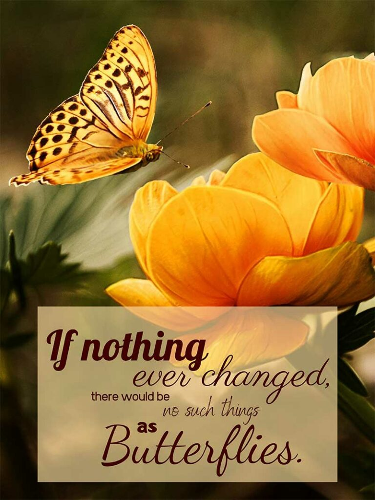 """""""If nothing ever changed, there would be no such things as butterflies."""""""