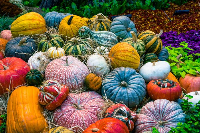 Colorful Fall Gourds for DIY Decor