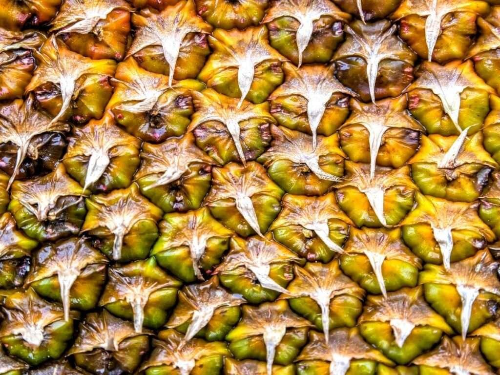 Fibonacci sequence pineapple