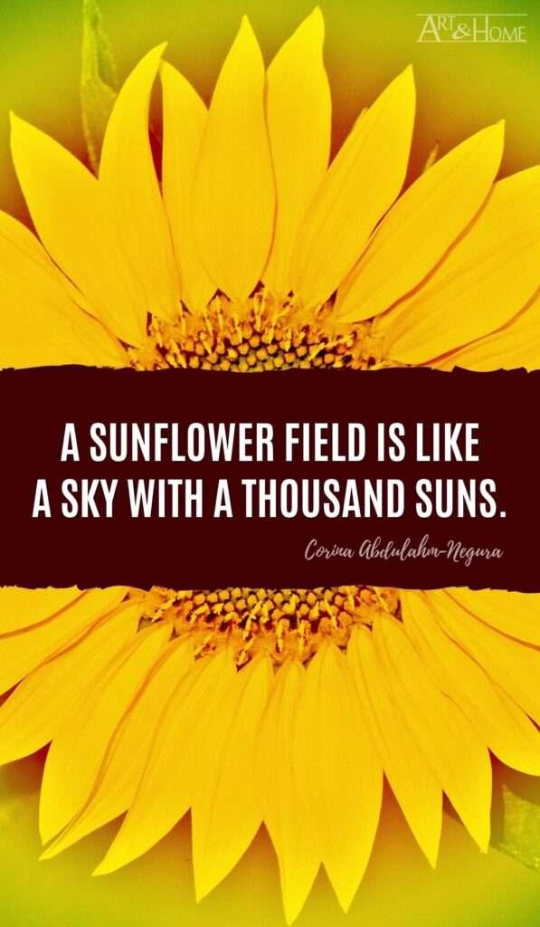 A sunflower field is like a sky with a thousand suns. Corina Abdulahm-Negura